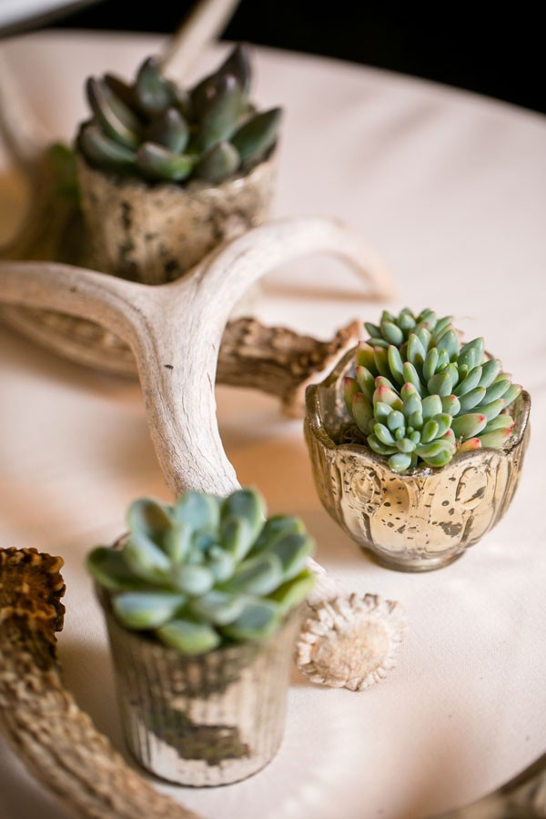 succulents in tiny mercury glass votives alongside branch and antlers
