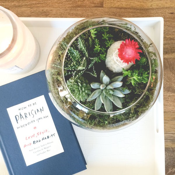 DIY terrarium with succulents as modern centerpiece