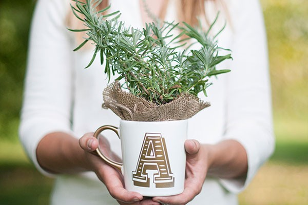 DIY project of personalizes mug with herb plant