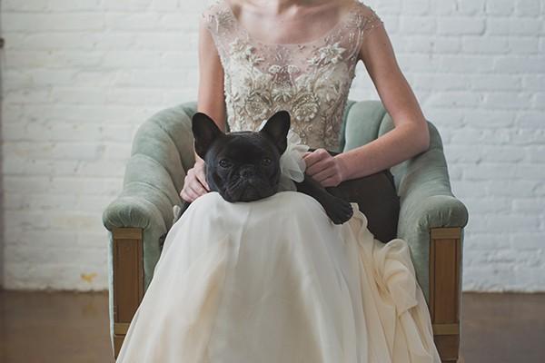 Bride and French bulldog in wedding collar from mywedding magazine