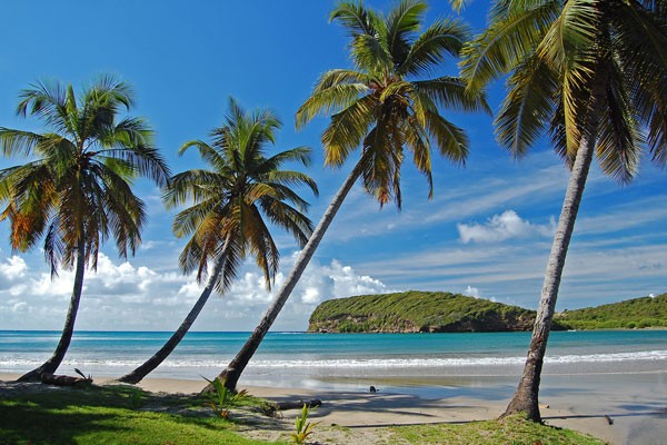 view of Grenada coastline with palm trees
