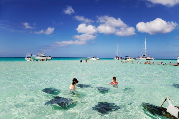 tourists gather to watch stringrays