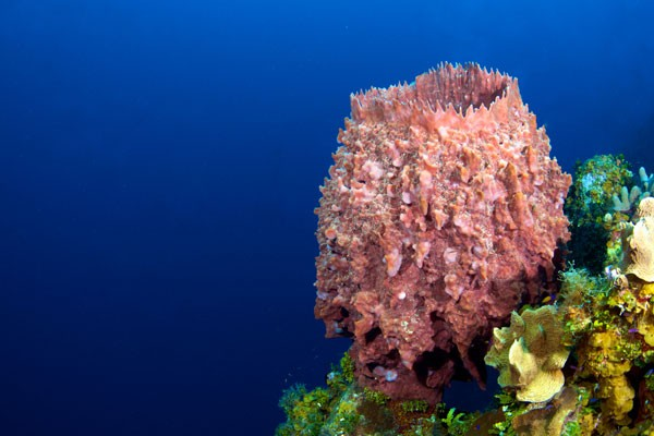 marine life on reef in Cayman Islands